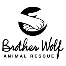 brother-wolf-animal-rescue-asheville